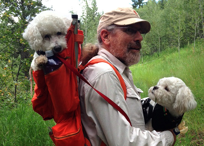 Over 14,000 Bichons Rescued Largest Breed Rescue in the Country