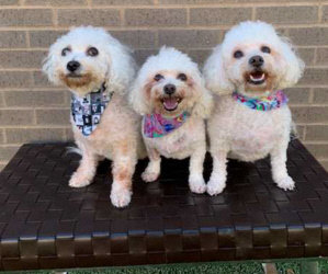 Matching Challenge for $500.00 and $100.00! The Trio May Have a Foster Home in Dallas!