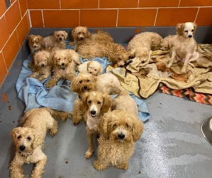 15 Rescued From The CACC Shelter In Chicago. Letter from Sara & Pics. Please Read. Help Is Needed.