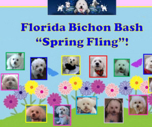 "You Are All Invited To The 2020 Small Paws Rescue Florida Bichon Bash ""Spring Fling"" in Safety Harbor Fl. On Saturday, March 21, 2020! E-Vite R.S.V.P. And Payment Info!"