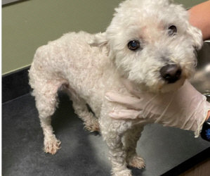 Update on Little Emmie W/ Video of Her Walking!/ Five New Small Paws Babies. I Know That a Couple of Them Have Met a Bichon!