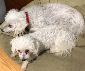 I  Want To Tell You An Easter Love Story of Anniedoo and Billybob Adam. 21 And 19 Years Old And The Miracle That Occurred So Many Years Ago.
