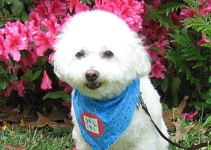 2021 Small Paws® Rescue Online Spring Auction Sunday, May 30 Through Sunday, June 13