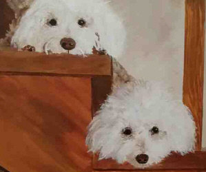 """Last Call! The Small Paws® Rescue Online Auction Ends At 10:00 P.M. E.S.T.!/ DogsWINEing Print/ Danbury Mint Christmas Express Train!/ TOP ITEM """"Watching"""" by Cathy Pearson/Danbury Mint Bichon Frise Lamp /Handmade Custom Bichon Frise Dog Leash Holder!"""