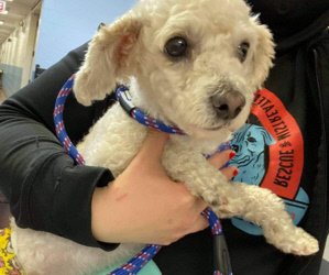 Nine New Rescues At Small Paws® Rescue. One Is Urgent, Was Hit By a Car, And Has A Broken Leg That Needs Surgery Tomorrow.