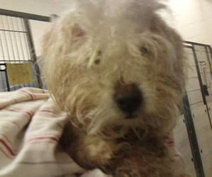 From My Heart. Please Read. Bichon Hit By A Car. Five New Small Paws® Dogs Need Help. $200 Matching Challenge.