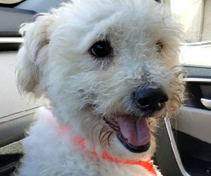 """Update On """"Finley"""" in MI. New Matching Challenge for $100.00 For Our Five Latest Rescues."""